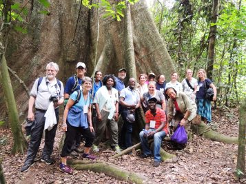 Kakum group big tree