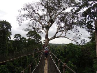 Kakum canopy walk